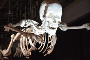 « Habibi » le squelette monumental de Adel Abdessemed accueille le visiteur dès son arrivée. Collection du Mamco.